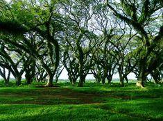 Hasil gambar untuk jawatan benculuk Goa, Stepping Stones, Maine, Wonderland, Scenery, Sunset, Outdoor Decor, Plants, Trees