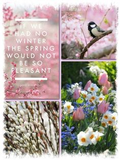 Pink Spring, If we had no Winter the spring would not be so pleasant. mood/color collage