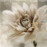 Found it at Wayfair - Revealed Artwork Blooming Softly II Graphic Art on Wrapped Canvas