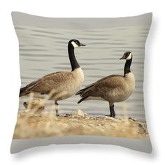 2nd In Series Of Canadian Goose Lake Images