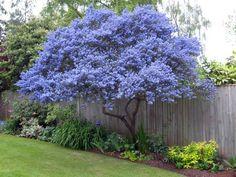 ตัวอย่างการลงต้นไม้ที่ปลูกริมรั้ว