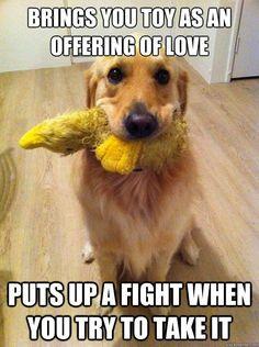 Retriever dog toys