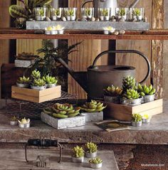 Roost Potted Succulent Candles *Next Day Shipping*