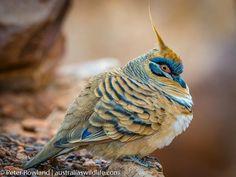 Birds, Unique, Animals, Color, Beauty, Animales, Animaux, Colour, Bird