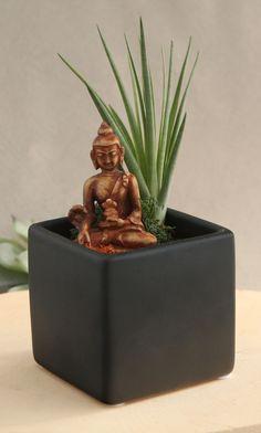 Buddha Living Terrarium