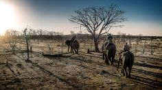 Bushtracks Africa #2 by Paulo Franco on 500px