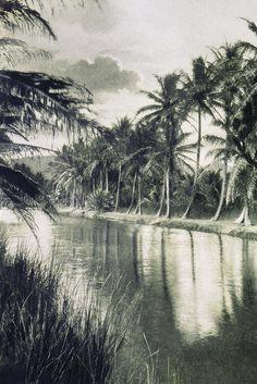 Vintage - Ala Wai Canal Photograph  - Vintage - Ala Wai Canal Fine Art Print