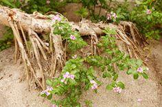 The Cherry Blossom Girl - Maldives 18