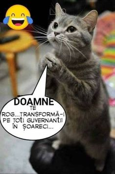 Cats, Funny, Romania, Album, Gatos, Funny Parenting, Cat, Kitty, Hilarious