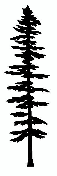 Picea sitchensis Sitka Spruce Coast Menzies silver or tideland spruce. Wood Burning Stencils, Wood Burning Tool, Wood Burning Crafts, Wood Burning Patterns, Wood Crafts, Silhouette Design, Tree Silhouette, Stencil Templates, Stencil Patterns