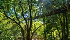 Set to open by early June the new treetop canopy walkway at Kirstenbosch National Botanical Garden will give visitors the chance to wander amidst the upper boughs of an indigenous forest and take in spectacular city views. The wood and steel boardwalk. National Botanical Gardens, Tree Canopy, Garden Trees, Permaculture, Walkway, Pathways, Wander, South Africa, Things To Do
