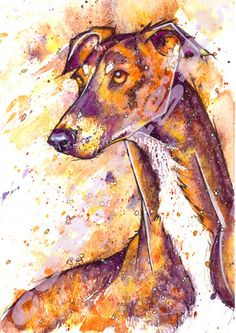 Fabulous Print of Original Watercolour Whippet Greyhound Lurcher Painting by Josie P   Size: 8.3ins x 11.7ins (29.7cm x 21cm)