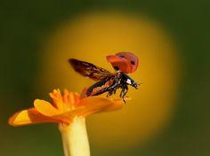 Комментарии « Бабочки в моем животе « Дневники « RC-MIR.com