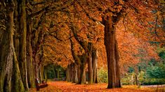 251 top fall wallpapers hd images autumn forest autumn leaves rh pinterest com