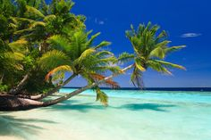 Wander Wisely with Cheap Hotels, Flights, Vacations & Travel Deals Before I Die, Cheap Hotels, Travel Deals, Bora Bora, Natural Wonders, Vacation Trips, Nice View, Places To Go, Cruise