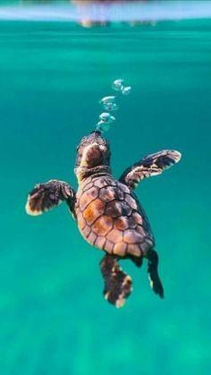 Tier Wallpaper, Cute Wallpaper Backgrounds, Animal Wallpaper, Cute Wallpapers, Nature Wallpaper, Iphone Wallpaper, Baby Sea Turtles, Cute Turtles, Turtle Baby