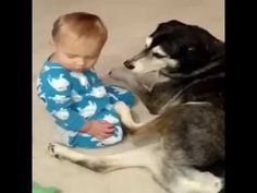 very cute dog take care of cute sleepy baby child...cute pets and animals