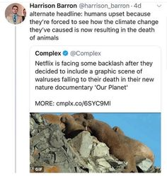 Also known as people not wanting to see how nature life happens. - Also known as people not wanting to see how nature life happens. There's ups and downs of life an - Save Our Earth, A Silent Voice, World Problems, Circle Of Life, Equal Rights, Faith In Humanity, Thought Provoking, Climate Change, In This World