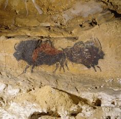Scenes from the Stone Age: The Cave Paintings of Lascaux Photo Gallery Stone Age Cave Paintings, Paleolithic Art, Art Rupestre, Lascaux, Ancient Artifacts, Rock Art, Oeuvre D'art, Archaeology, Les Oeuvres