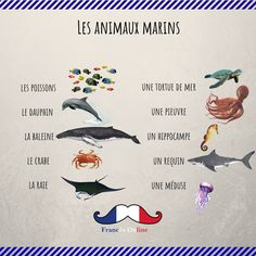 Basic French Words, French Phrases, How To Speak French, French Quotes, Learn French, French Language Lessons, French Language Learning, French Lessons, French Expressions
