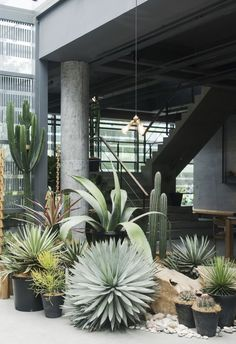 Plants / Herbarium/ garden 25 Beautiful Desert Landscaping IdeasHome Design And Interior Modern Landscape Design, Modern Garden Design, Landscape Plans, Modern Landscaping, Front Yard Landscaping, Landscape Architecture, Landscaping Ideas, Natural Landscaping, Hillside Landscaping
