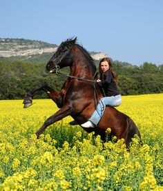 Bareback Riding, Horse Riding, Pet Dogs, Dog Cat, Pets, Horse Hay, Real Cowboys, Cool Photos, Amazing Photos