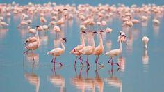Flamingos - Rose Quartz & Serenity