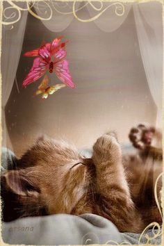 ❤Sleeping Kitten and Butterflies GIF Kitten Love, I Love Cats, Cute Cats, Funny Cats, Pretty Cats, Beautiful Cats, Animals Beautiful, Cute Animals, Cute Photos