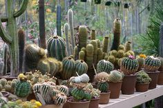 cool weather container gardening california   ... Collection Galleries World Map App Garden Camera Finder Flickr Blog