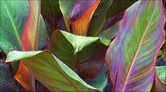 Palm leaves in rain | por Jan Hansen Gregory