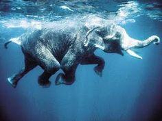 float, elephant, swim, blue