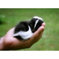 Animal baby cuteness - now packaged in handful size portions for your consumption! :D