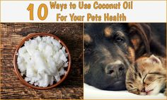10 Ways to Use Coconut Oil For Your Pets Health