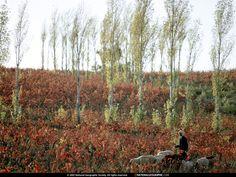 Darmowe tapety na kompa - Dzikiej flory: http://wallpapic.pl/national-geographic-zdjecia/dzikiej-flory/wallpaper-38465