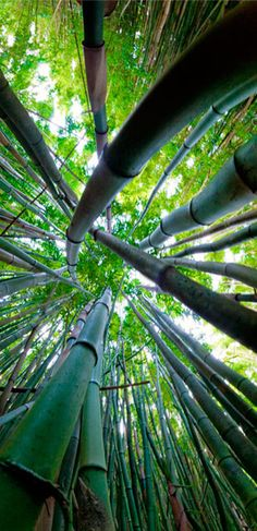 Zen in nature - Bamboo: Bend but don't break, be flexible yet firmly rooted. Nature can show us a lot, so simple and a good perspective to learn.