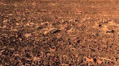2015 International Year of Soils: #Soils Support #Agriculture