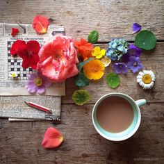20 Beautiful Still Life Flower Photography examples by Philippa ...