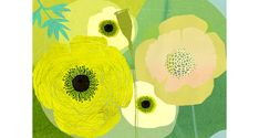 citron flower illustration _ Pilgrim Waters.