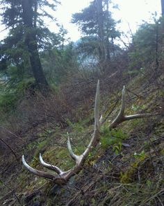 Elk shed on the hill