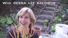 Debra Pots Six Sure-Fire Succulents for Containers