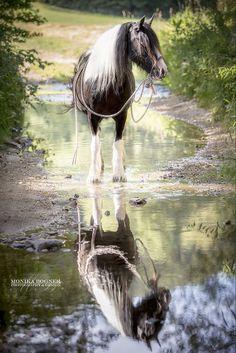 Pferde in der Natur - Monika Bogner Photography Beautiful Horse Pictures, Beautiful Horses, Animals Beautiful, Cute Animals, Reflection Photography, Equine Photography, Stunning Photography, Cute Horses, Horse Love