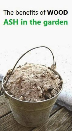 Alternative Gardning: The benefits of WOOD ASH in the garden