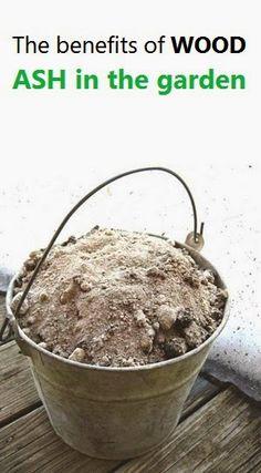 Alternative Gardning: The benefits of WOOD ASH in the garden