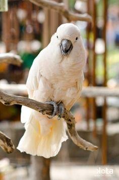 kakadu <3, kterou lusie.macotkina