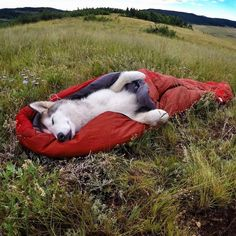 Man Takes Wolfdog On Epic Adventures Because He Hates Seeing Dogs Locked Away