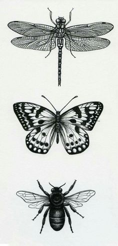 Lisa Alderson - LA - Bugs - Lisa Alderson – LA – Bugs You are in the right place about Lisa Alderson – LA – Bugs Tattoo - Bugs Drawing, Drawing Sketches, Deep Drawing, Drawing Drawing, Tattoo Drawings, Art Drawings, Bug Tattoo, Tattoo Zeichnungen, Butterfly Drawing