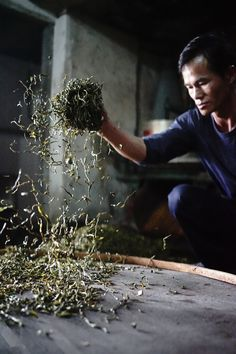 Process of Feng Huang Dan cong Tea. i am amazed by this traditional method of processing chinese Tea