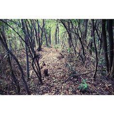 【nao_eno】さんのInstagramをピンしています。 《In a forest  right next to my grandma's house  一歩踏み出すごとにパキパキと鳴る 枯れ枝の折れる音と落ち葉のカサカサ、 あとは鳥の声と 遠くに車の通る音。それだけ。 森に入ると心が鎮まる*  #裏山 #森 #冬の山 #静か #和歌山 #実家 #散歩 #お正月 #ファインダー越しの私の世界  #写真好きな人と繋がりたい  #love_nippon #love_japan  #love #forest #winter #japan》