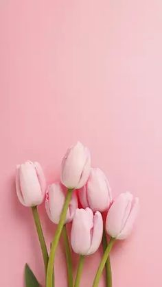 Easter Inspiration pink tulips at the bottom, on a pink background, spring wallpaper, phone wallpaper Frühling Wallpaper, Nature Iphone Wallpaper, Spring Wallpaper, Flower Phone Wallpaper, Wallpaper Ideas, Trendy Wallpaper, Pink Wallpaper Backgrounds, Vintage Backgrounds, Good Iphone Backgrounds