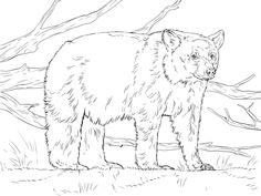 f60d3bcbdbfdc395b7177ec4a53e41c4 american black bear animal coloring pages
